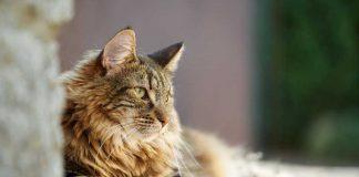 Come interpretare gli 8 versi del gatto più comuni