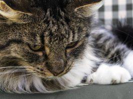 Gatto in appartamento: come farlo stare bene