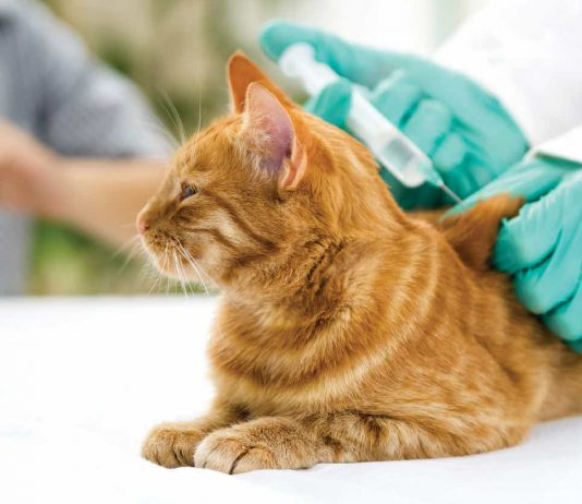 Vaccinazioni del gatto